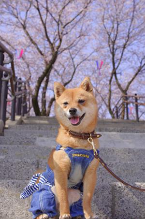 http://blog.cnobi.jp/v1/blog/user/5372066eaa7f42ee290a4176dda1b356/1427787642