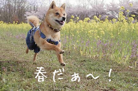 http://file.udon.sakeblog.net/18014e20.jpeg