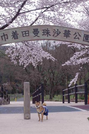 http://file.udon.sakeblog.net/IMGP9298.jpg