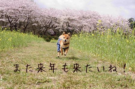 http://blog.cnobi.jp/v1/blog/user/5372066eaa7f42ee290a4176dda1b356/1427977225