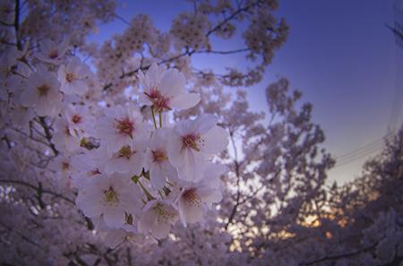 http://file.udon.sakeblog.net/IMGP9446.jpg
