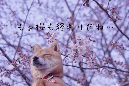 http://blog.cnobi.jp/v1/blog/user/5372066eaa7f42ee290a4176dda1b356/1428454328