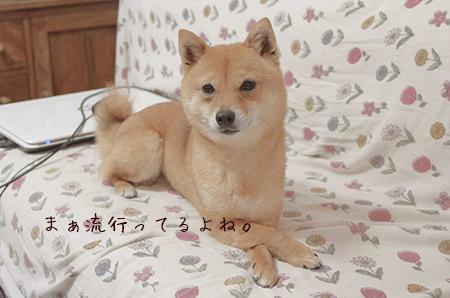 http://blog.cnobi.jp/v1/blog/user/5372066eaa7f42ee290a4176dda1b356/1429877017