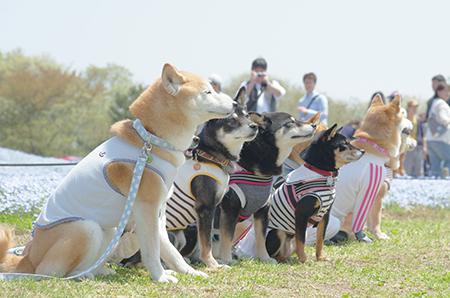 http://file.udon.sakeblog.net/IMGP9777.jpg