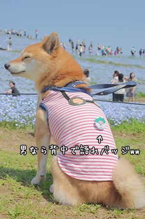 http://blog.cnobi.jp/v1/blog/user/5372066eaa7f42ee290a4176dda1b356/1430265962