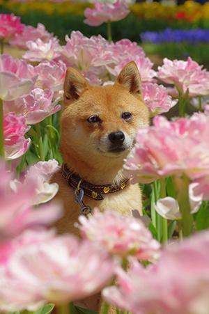 http://blog.cnobi.jp/v1/blog/user/5372066eaa7f42ee290a4176dda1b356/1430570169