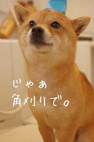http://blog.cnobi.jp/v1/blog/user/5372066eaa7f42ee290a4176dda1b356/1431082200