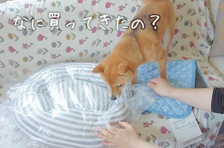 http://file.udon.sakeblog.net/IMGP0037.jpg