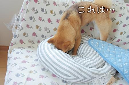 http://file.udon.sakeblog.net/IMGP0043.jpg