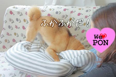 http://file.udon.sakeblog.net/IMGP0058.jpg