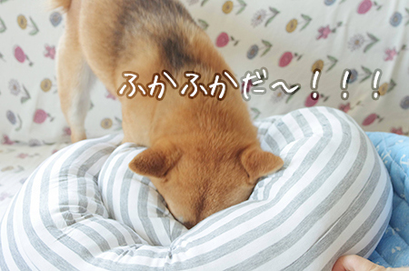 http://file.udon.sakeblog.net/IMGP0076.jpg