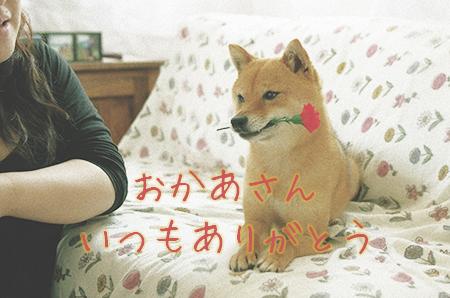 http://file.udon.sakeblog.net/IMGP0103b.jpg