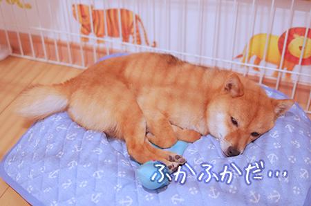 http://file.udon.sakeblog.net/IMGP9805.jpg