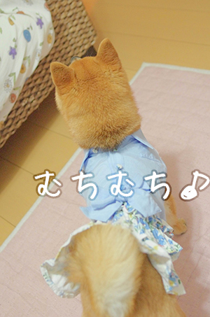 http://file.udon.sakeblog.net/IMGP9812.jpg