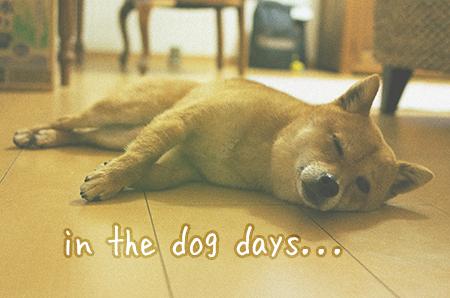 http://file.udon.sakeblog.net/IMGP9809a.jpg