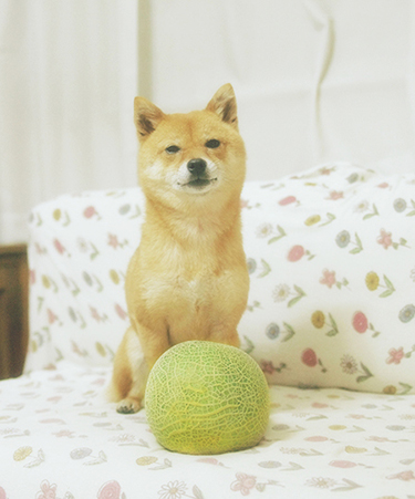 http://blog.cnobi.jp/v1/blog/user/5372066eaa7f42ee290a4176dda1b356/1432432038