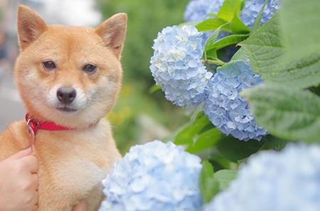 http://blog.cnobi.jp/v1/blog/user/5372066eaa7f42ee290a4176dda1b356/1433910677