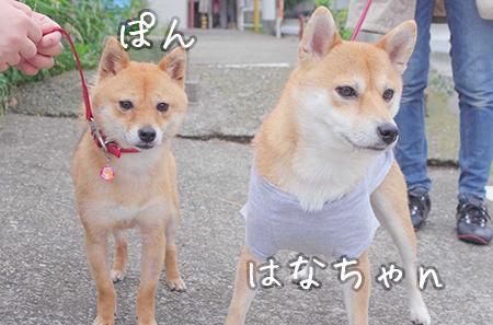 http://blog.cnobi.jp/v1/blog/user/5372066eaa7f42ee290a4176dda1b356/1433910716