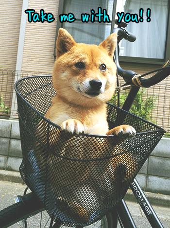 http://file.udon.sakeblog.net/IMG_1423.jpg