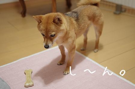 http://file.udon.sakeblog.net/IMGP0047.jpg