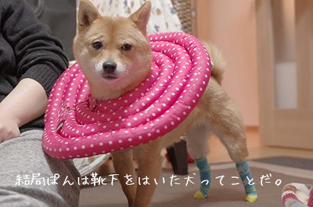 http://file.udon.sakeblog.net/2271a409.jpeg