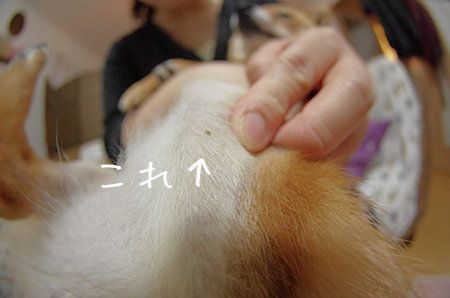 http://file.udon.sakeblog.net/IMGP0282.jpg