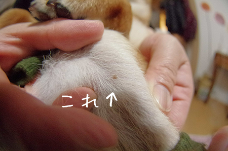 http://file.udon.sakeblog.net/IMGP0284.jpg