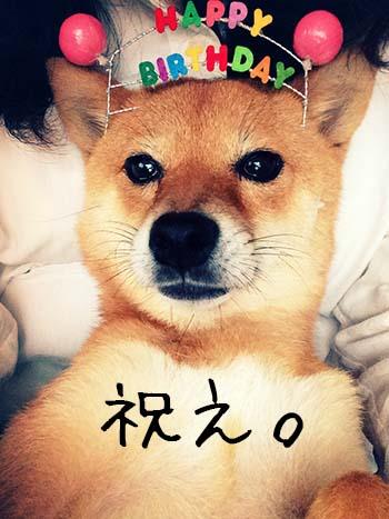http://file.udon.sakeblog.net/IMG_1441.jpg