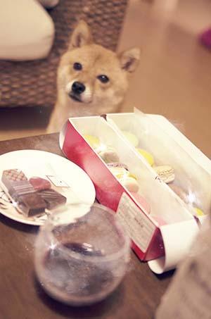 http://blog.cnobi.jp/v1/blog/user/5372066eaa7f42ee290a4176dda1b356/1436347038