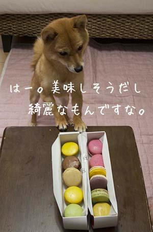 http://blog.cnobi.jp/v1/blog/user/5372066eaa7f42ee290a4176dda1b356/1436347041
