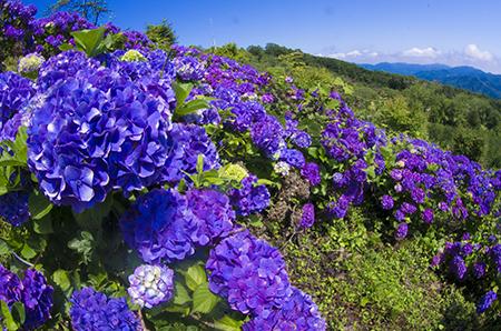 http://file.udon.sakeblog.net/IMGP0023.jpg