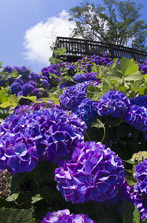 http://file.udon.sakeblog.net/IMGP0098.jpg