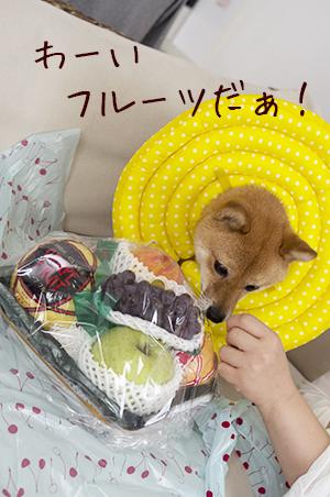 http://file.udon.sakeblog.net/IMGP0202.jpg