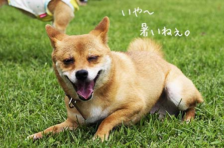 http://blog.cnobi.jp/v1/blog/user/5372066eaa7f42ee290a4176dda1b356/1437869555
