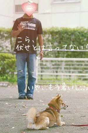 http://blog.cnobi.jp/v1/blog/user/5372066eaa7f42ee290a4176dda1b356/1438149859