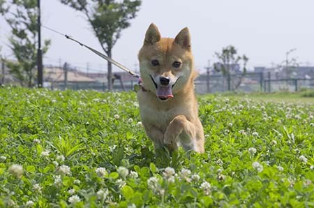 http://blog.cnobi.jp/v1/blog/user/5372066eaa7f42ee290a4176dda1b356/1438515024