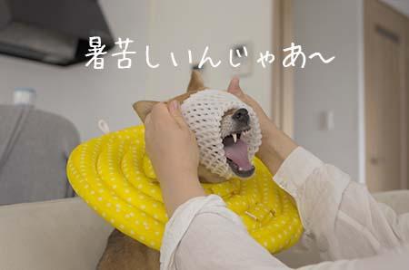 http://file.udon.sakeblog.net/a75a1764.jpeg