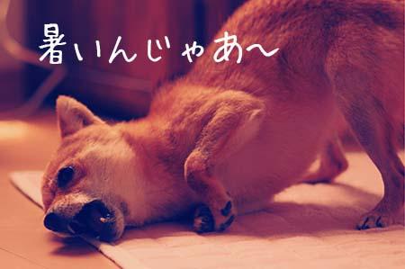 http://file.udon.sakeblog.net/IMGP4815.jpg