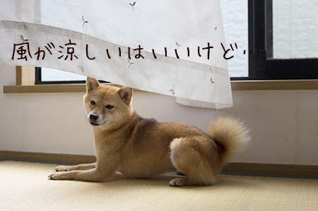 http://file.udon.sakeblog.net/IMGP0472.jpg
