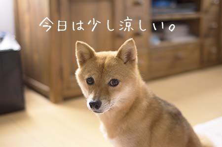 http://file.udon.sakeblog.net/IMGP0443.jpg