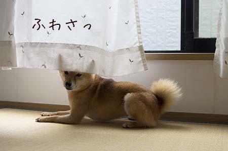 http://file.udon.sakeblog.net/IMGP0474.jpg