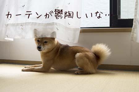 http://file.udon.sakeblog.net/IMGP0475.jpg