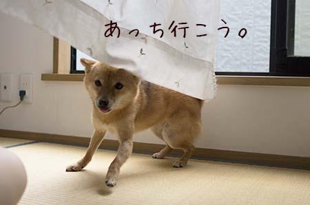 http://file.udon.sakeblog.net/569e0922.jpeg