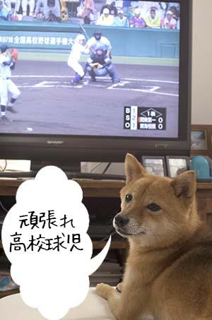 http://blog.cnobi.jp/v1/blog/user/5372066eaa7f42ee290a4176dda1b356/1439973043
