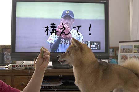 http://file.udon.sakeblog.net/6b8b13e1.jpeg