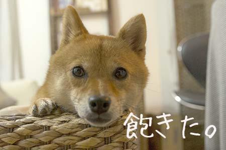 http://blog.cnobi.jp/v1/blog/user/5372066eaa7f42ee290a4176dda1b356/1440933350