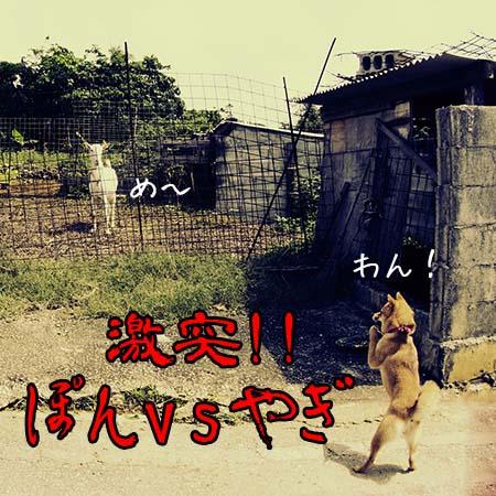 http://file.udon.sakeblog.net/0241b921.jpeg