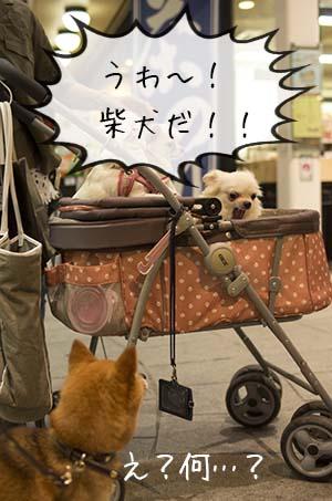 http://file.udon.sakeblog.net/51f36716.jpeg