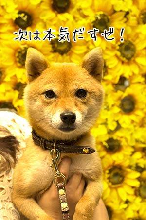 http://file.udon.sakeblog.net/37691b4a.jpeg