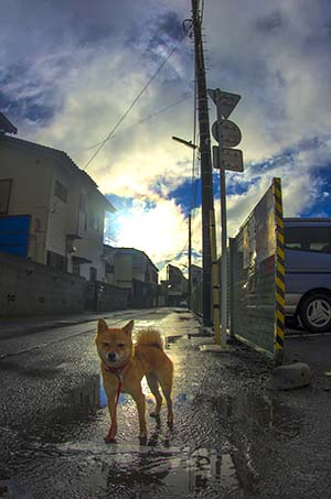 http://file.udon.sakeblog.net/IMGP0863.jpg